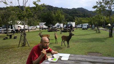 ガンジーと鹿20110917.jpg